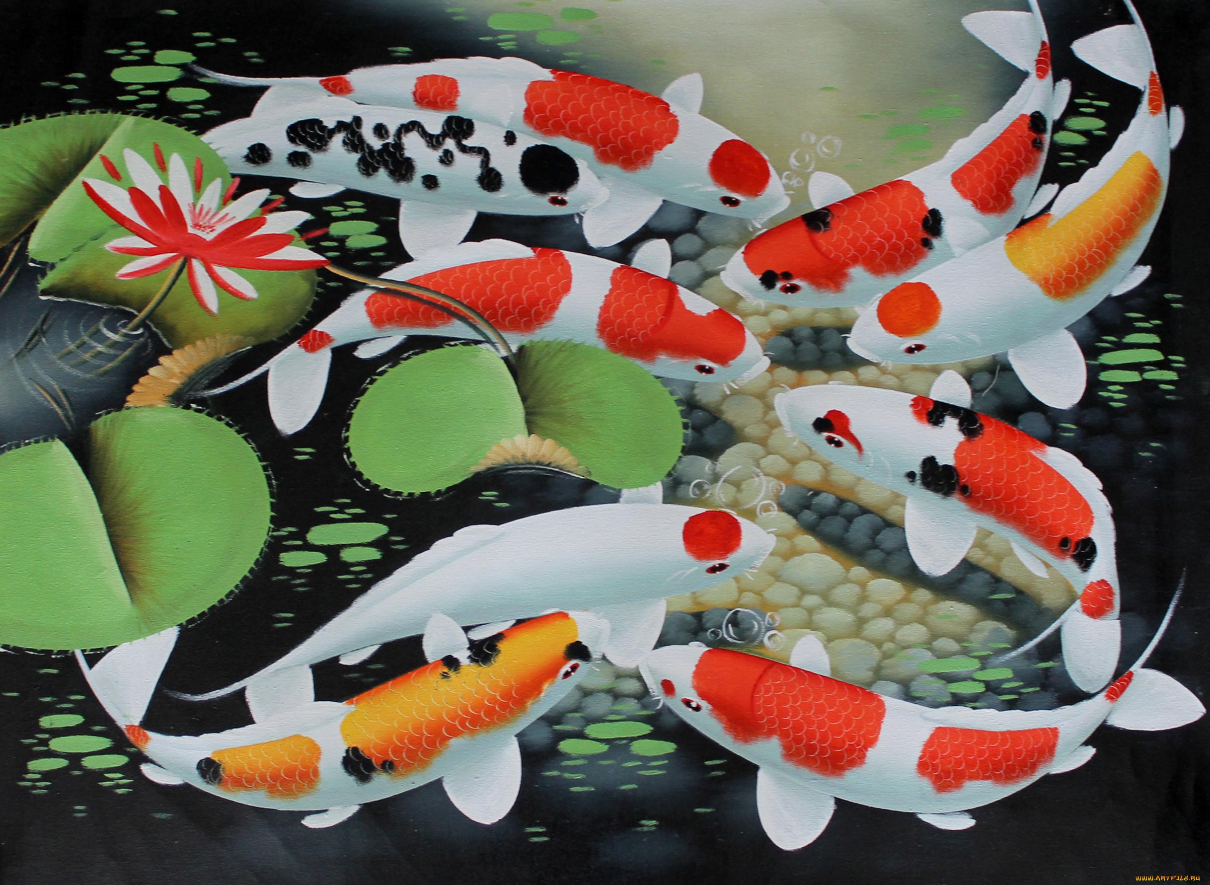 Картинки японская рыба